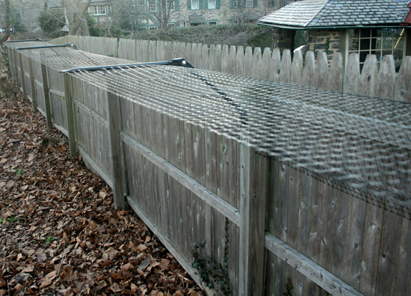 Dog Proof Your Backyard Fence Siberian Husky Puppies For