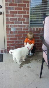 little boy with white husky puppy