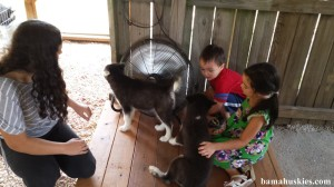 a boy and girl petting a black and white husky puppy