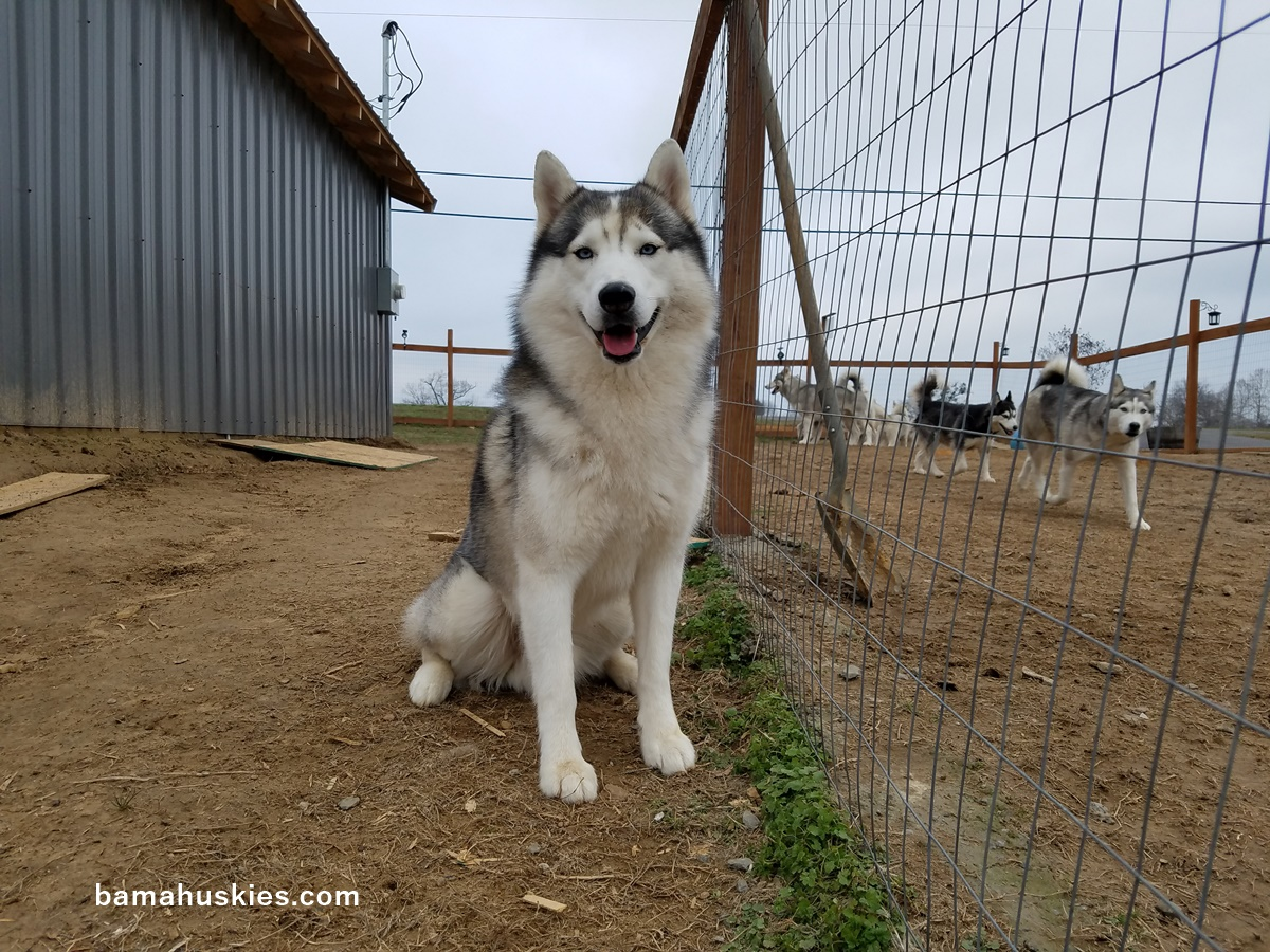 Upcoming Litters – S...
