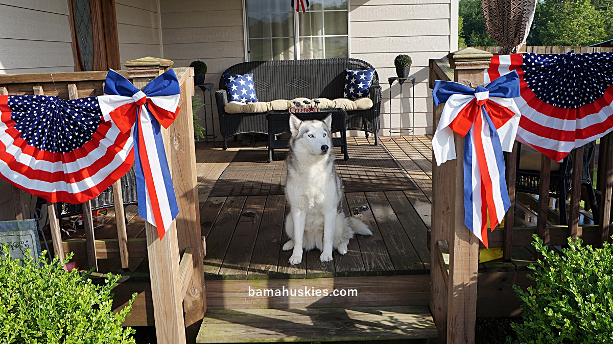 Husky puppies for adoption in california - Husky Puppies